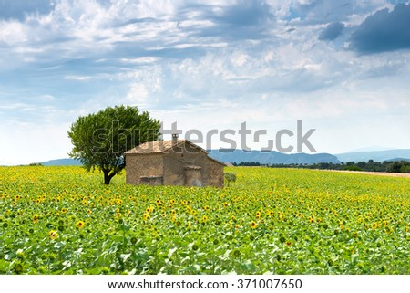 Landscape with sunflower field ,France