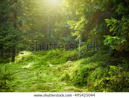 Landscape with sunlit spruce tree forest