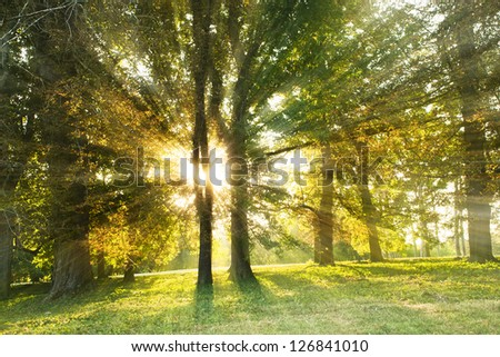 Landscape with sunny forest in early morning  sun lights - stock photo