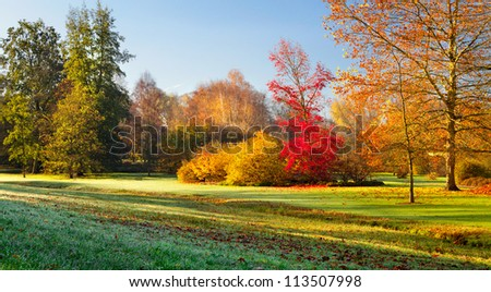 Landscape with the Fall morning in the park. Dew on the grass. Autumn Landscape. - stock photo