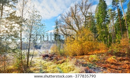 Landscape with the frozen plants and the hoar-frost - stock photo