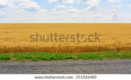 Landscape with the wheat field - stock photo