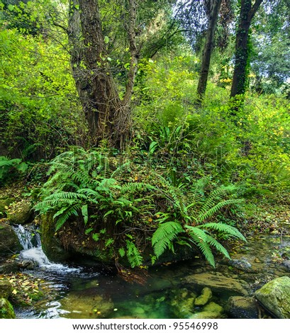 landscape with trees and ferns next to a small river - stock photo