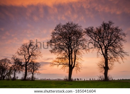 landscape with trees colorful sunset sky - stock photo