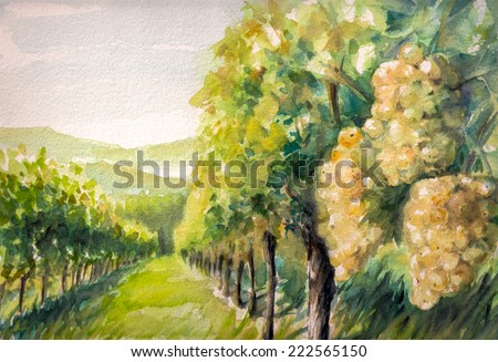 Landscape with vineyard.Picture created with watercolors. - stock photo