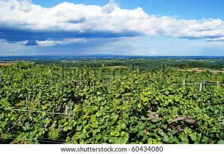Landscape with vineyard-Styria,Austria. - stock photo
