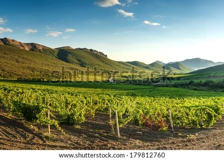Landscape with vineyards in mountain - stock photo