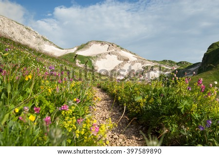 Landscape with wildflowers meadow and path in the Caucasus mountains, Russia - stock photo