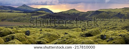 Landscape with wooly moss of Iceland. The moss is a predominant part of the wild vegetation & usually the first to colonize newly run lava, covering the sharp-edged black stone with soft green carpets - stock photo