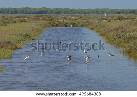landscapes birds and marshes of the salt