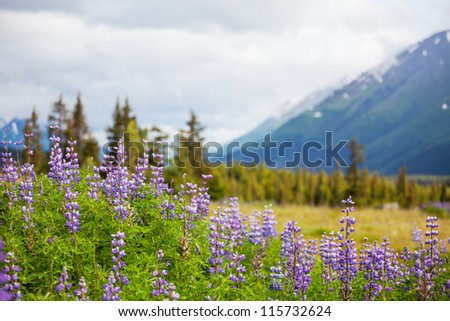 landscapes in Alaska - stock photo