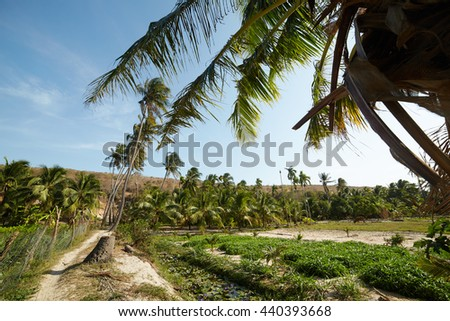 landscapes with palm trees in Vietnam