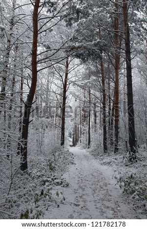 lane in a snowy forest - stock photo