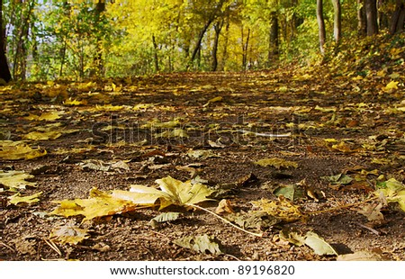 Lane forest leafs fall poland stock photo 89196820 shutterstock lane in forest with leafs in the fall poland publicscrutiny Gallery