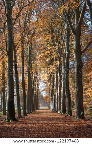 Lane with beech trees at Groeneveld Estate in autumn (Baarn, the Netherlands). Look also for the winter, spring and summer version of this location. Files: 122197462, 138936659 and 157894688 - stock photo