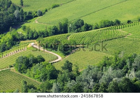 langhe vineyards