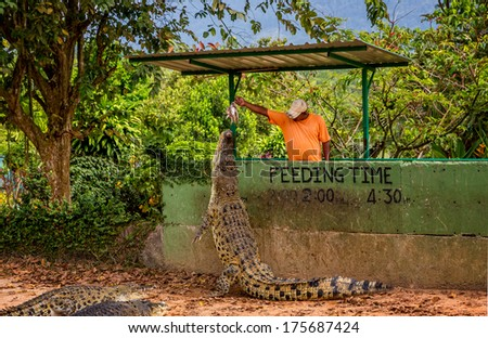 LANGKAWI-January 4:Unidentified Man feeds a crocodile at Langkawi Crocodile Farm on January 4th ,2014 in Langkawi, Malaysia. This Farm houses more than 1000 crocodiles and alligators.  - stock photo
