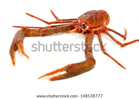 Langoustine also known as Dublin Bay Prawn, Scampo or Norway Lobster (Nephrops norvegicus) on White Background. More seafood in my portfolio.