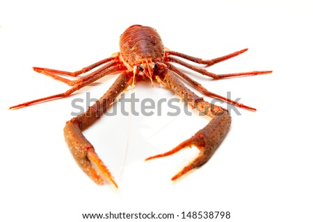 Langoustine also known as Dublin Bay Prawn, Scampo or Norway Lobster (Nephrops norvegicus) on White Background. More seafood in my portfolio. - stock photo
