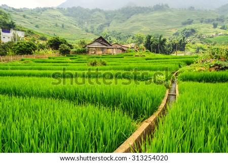 Lanscape in sapa, Laocai, Vietnam