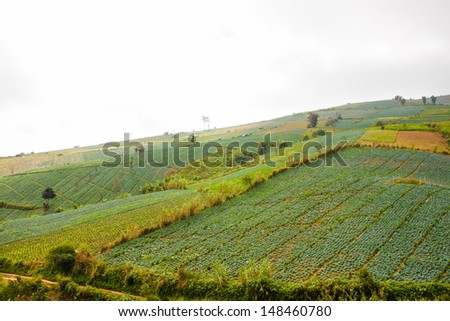 lanscape of Phu Tub Berg and cabbage field
