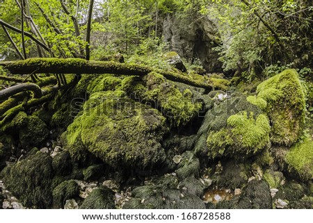 Lansdcape with rocks, tree trunks and moss - stock photo