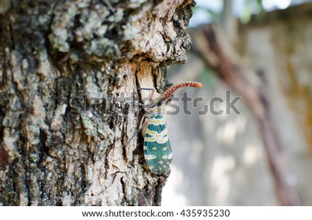 Lantern Fly, the insect on tree.