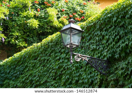 Lantern on the wall, overgrown with ivy.