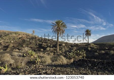 Lanzarote landscape. Nice vocvanic zone in canary island - stock photo