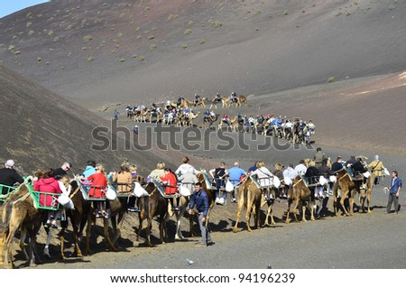 LANZAROTE, SPAIN - JANUARY 18: camel riding for tourists to volcanic cones is a tourist attraction in the Timanfaya Nationalpark on the Canary Island- on January 18, 2012 in Lanzarote, Spain - stock photo