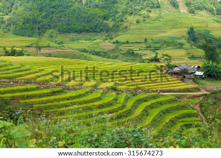 Laocai Vietnam september 10 2015 Vietnam Paddy fields, terraced culture, yty laocai, Vietnam .