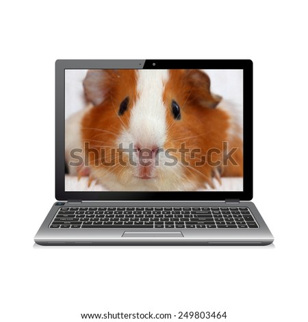 Laptop computer with guinea pig on screen - stock photo