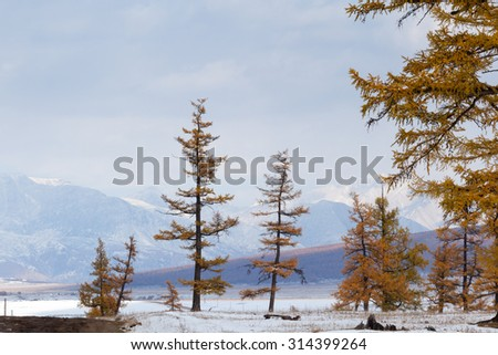 Larch mountains in the background. Mongolia. Landscape - stock photo