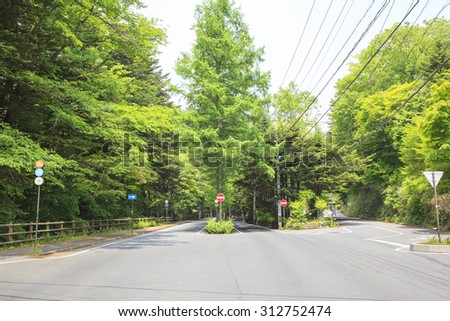 Larch tree lined of Mikasa street; Karuizawa; Nagano; Japan - stock photo