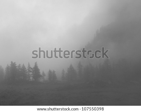 Larches in the mist - stock photo