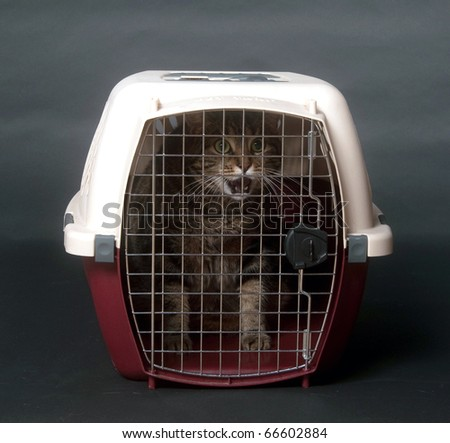 Large adult tabby cat in pet carrier on black background