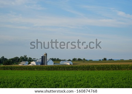 Large amish country farm with acres and acres of unpicked corn and other farm products  - stock photo