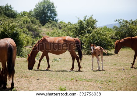 large and small horses grazing in field