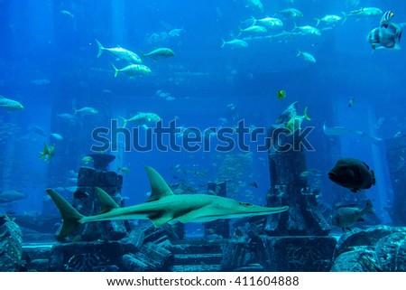 Large aquarium in Dubai, United Arab Emirates - stock photo
