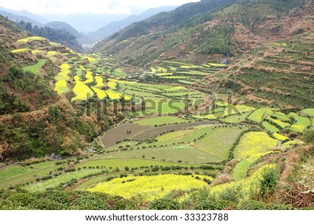 large area of rapeseed flowers and  green terrace among the valley, shooted from the hilltop - stock photo