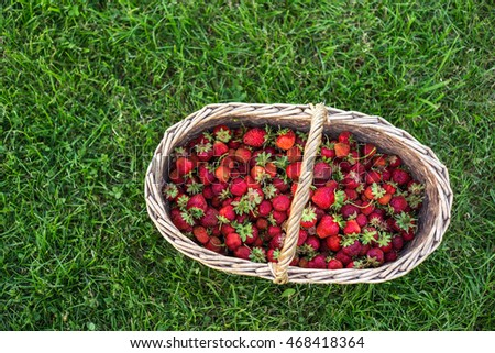 large basket harvest a strawberry on a background of green lawn