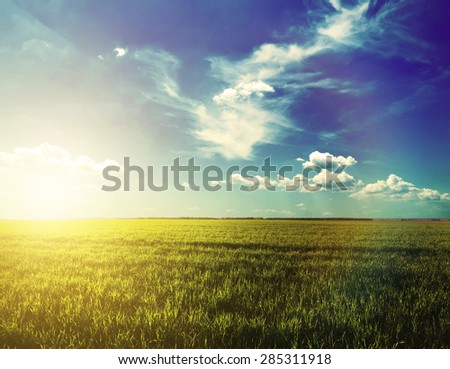 Large beautiful spring the field on sunset - stock photo