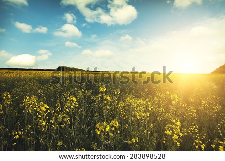 Large beautiful spring the field with a distant kind on a forest and dark sky - stock photo