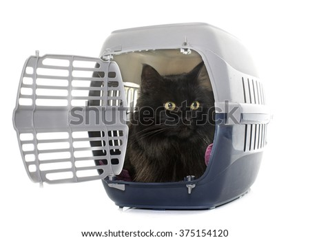 large black cat in kennel in front of white background - stock photo