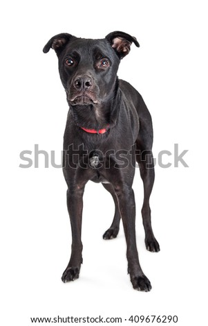 Large black crossbreed dog with sad and lonely expression - stock photo