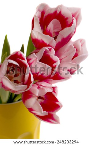Large bouquet of tulips in a yellow vase on a white background. - stock photo