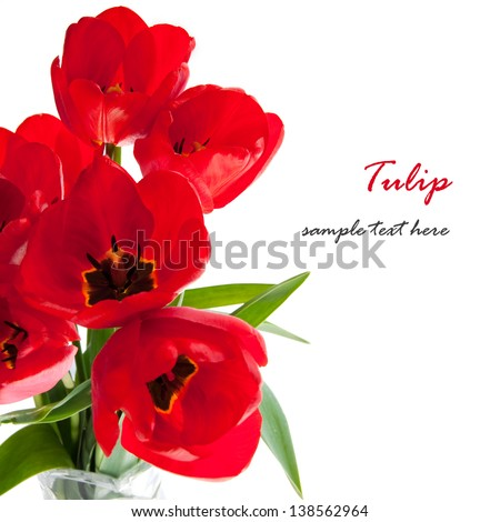 Large bouquet of tulips on a white background - stock photo