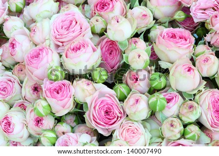 Large bright bouquet of freshly cut big beautiful white-pink roses. - stock photo