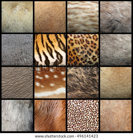 large collection of animal pelts, real fur