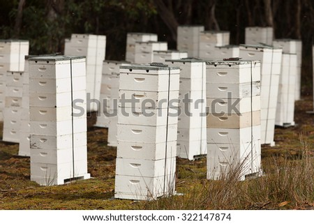 Large collection of Beehives in the bush, Tasmania, Australia - stock photo